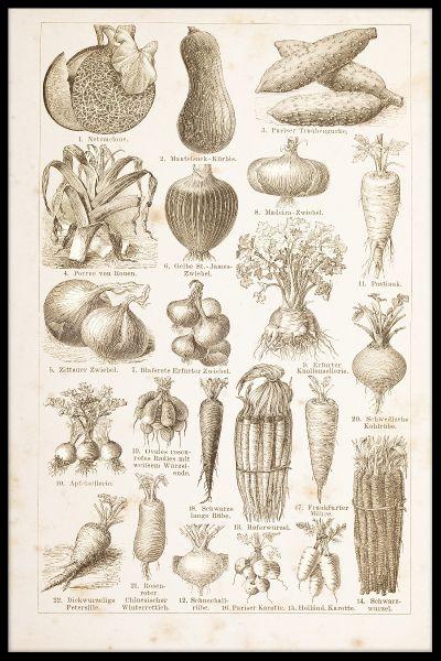 Vegetables Vintage Poster