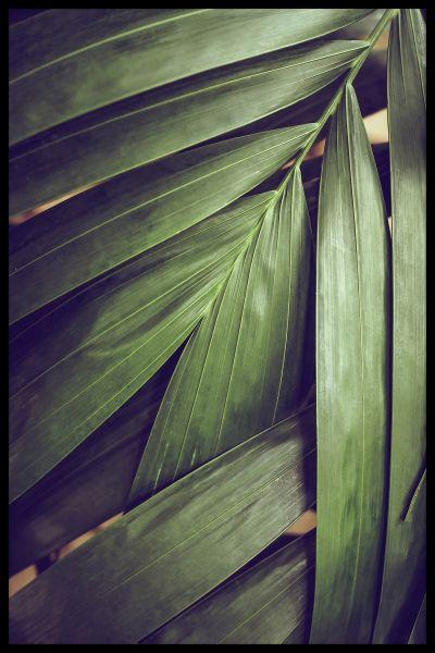 Rain-forest Leaves Poster