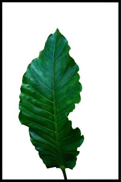 Green Leaf White Poster