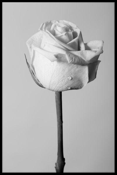 Flower N03 Poster