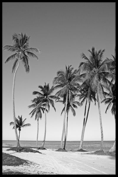 Black & White Beach N02 Poster