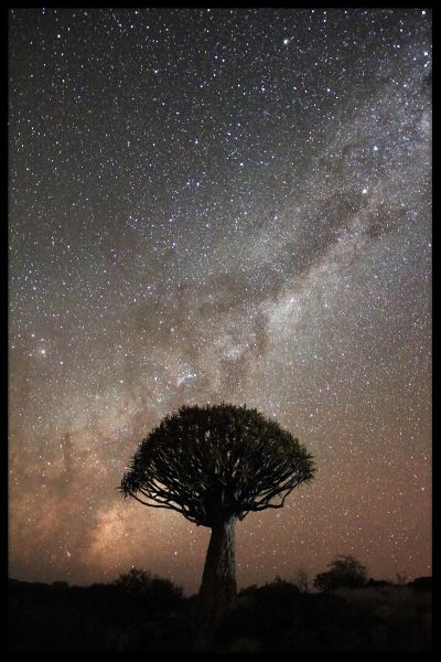 Quiver Tree Milkyway Poster