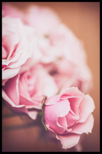 Pink Roses N02 Poster
