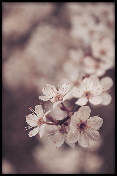 Flowers N04 Poster