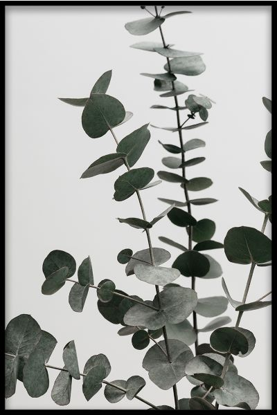 Botanical Collection Plant N03 Poster