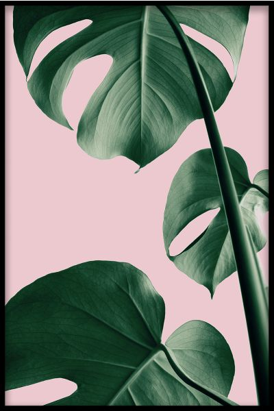Pink Monstera N03 Poster