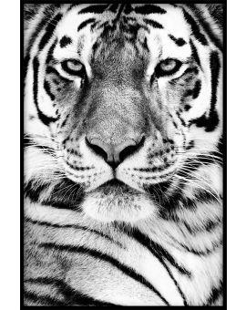 Siberian Tiger Portrait Poster