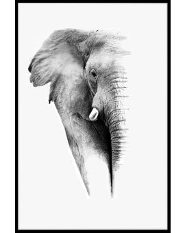 Elephant White Portrait Poster