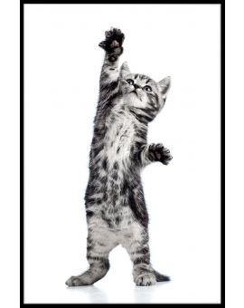 Playful Kitten Poster