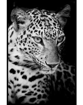 Leopard N02 Poster