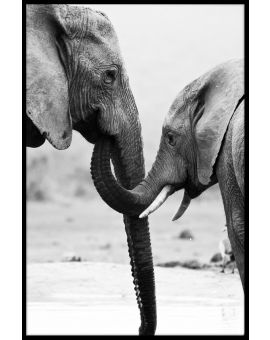 Elephant Mother and Son Poster