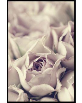 Vintage Pastel Rose Poster