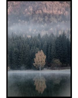 Sunrise Misty Poster