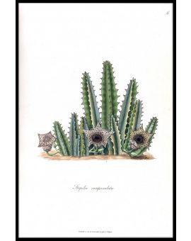 Cactus Illustration N02 Poster