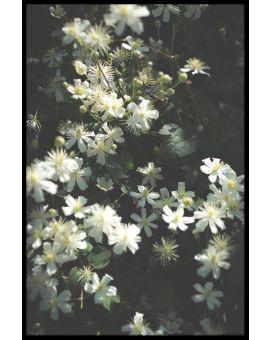 Stockholm Flower Poster
