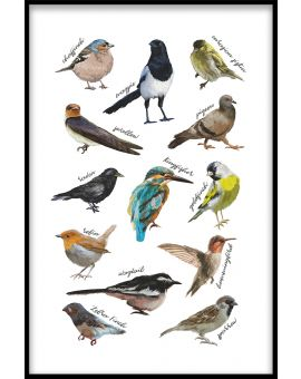 Types of Birds Poster