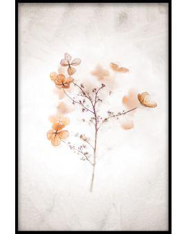 Plants & Flowers N01 Poster