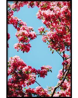 Cherry Blossom N06 Poster