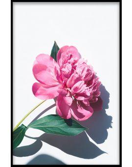 Les Fleurs N01 Poster